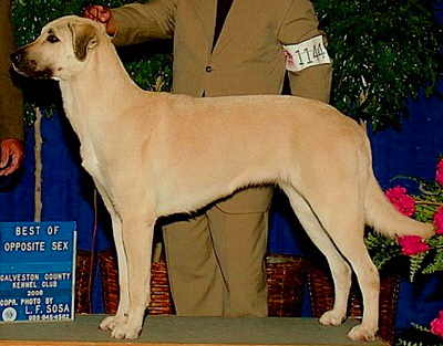 CHAMPION INANNA BETHANY BAY OF LUCKY HIT at 1 year - Handsome x Grace Nov 4, 2004, litter