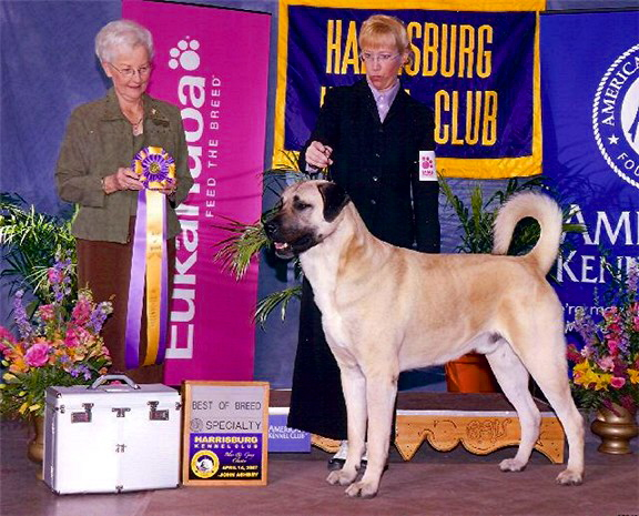 April 14, 2007 - BEST OF BREED - BOUDREAU at Harrisberg Regional Speciality
