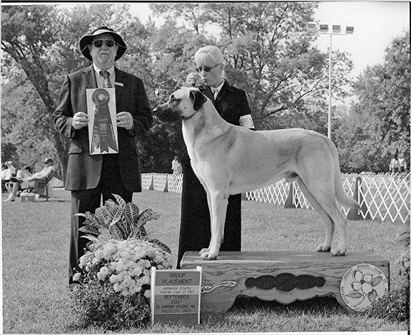 September, 2007 - BEST OF BREED and GROUP PLACEMENT - BOUDREAU