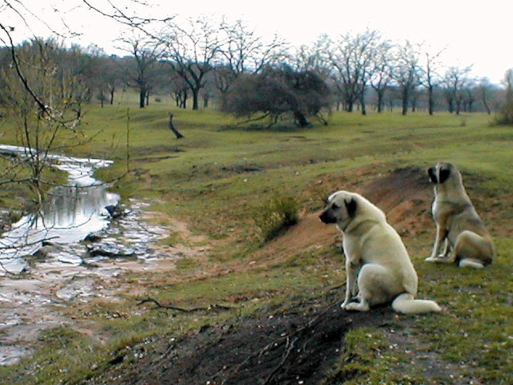 Case and his sister, Sahara, watching over Lucky Hit Ranch March 26, 2005