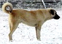 Link to The Genetic Difference Between Anatolians and Kangals