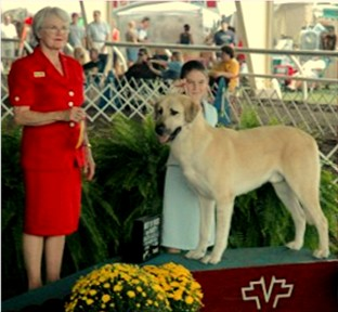 CHAMPION Birinci's Yahsi (Handsome) winning his first BEST OF BREED and obtaining two breed points