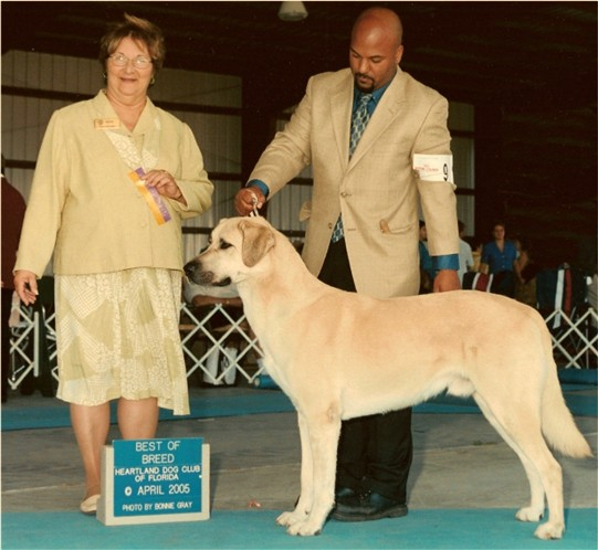 Champion Birinci's Yahsi (Handsome) winning BEST OF BREED, April, 2005 at Heartland Dog Club Show in Florida