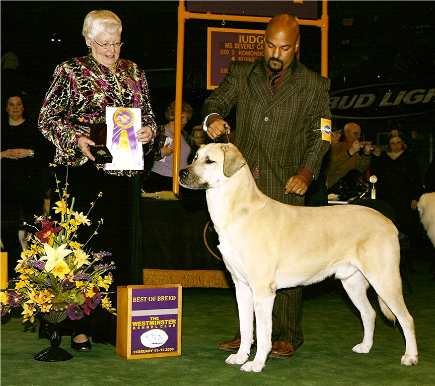 Birinci's Yahsi Best of Breed Westminister